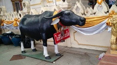Another sacred ruminant in the same temple