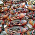 Black crabs at this superb market