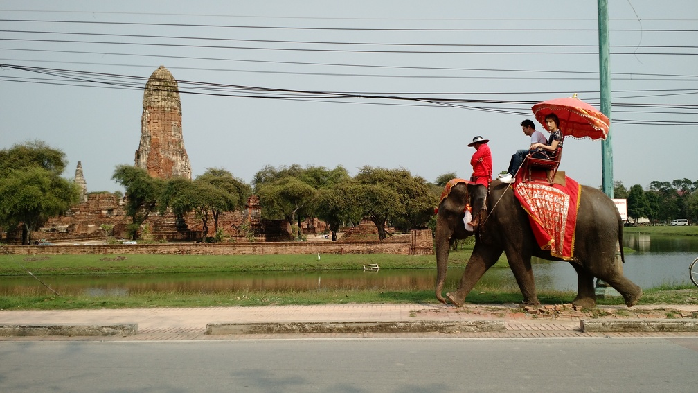 We biked past several elephants with riders like this